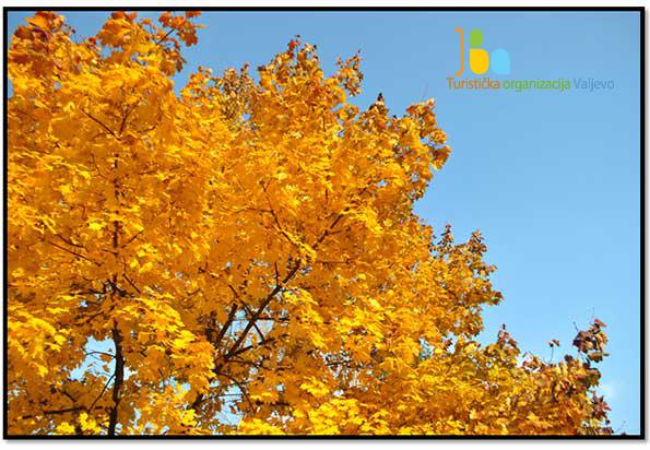 Ugradu.info Valjevo jesen krosnja22 1